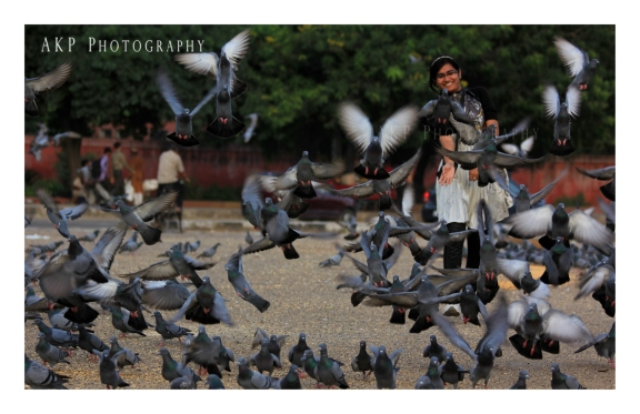 Thousand of pigeons nest around the Albert Hall museum... Photo: AKP Photography